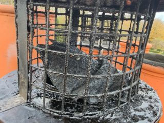 Delaminating cowl paint blocking chimneys!